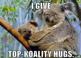 Funny koala meme collection (9 pictures) | Animal Space via Relatably.com