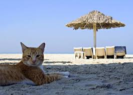Image result for cat at the beach