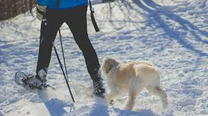 The 20 Best Cold-Weather <b>Dog</b> Breeds | Outside Online