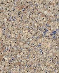 countertops popular options today: closeup of blue sahara quartz countertop