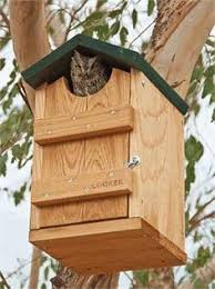 Robin Bird House Plans   thinking this might be good in my yard    Robin Bird House Plans   thinking this might be good in my yard  to keep the babies better protected    I wanna do this   Pinterest   Bird House Plans