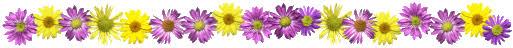 Image result for flower divider