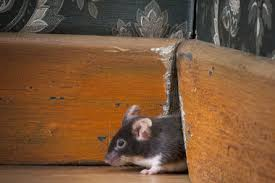 How to Prevent and Fight Rodent Infestations - Lower East Side ...
