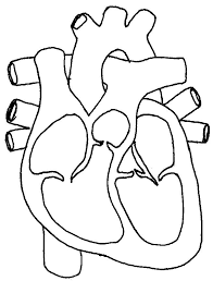 heart diagram unlabeled cliparts co on simple engine parts diagram with labels