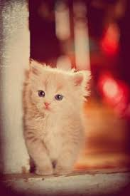 Untitled | Kittens cutest, Cats, Cute animals