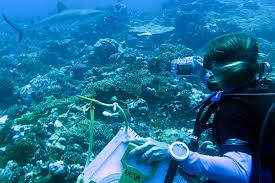 becoming a marine biologist marine biologist job description and salary