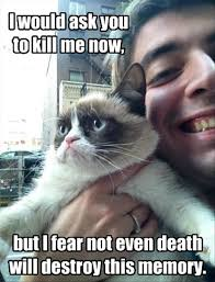 grumpy cat, funny meme - Dump A Day via Relatably.com