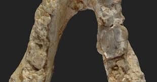 Restos prehumanos de 7,2 millones de años