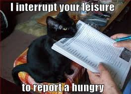 Report A Hungry Cat | Cats | Know Your Meme via Relatably.com