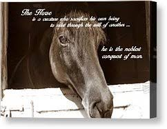 Noble Stallion Quote by JAMART Photography