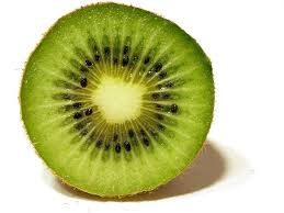 Image result for pictures of kiwi