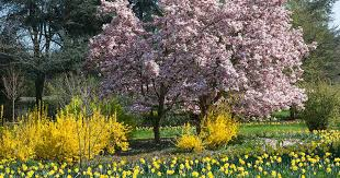 25 of the Best Early <b>Spring</b> Blooming <b>Flowers</b> | Gardener's Path