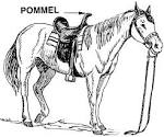 Images & Illustrations of pommel