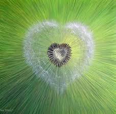 Kết quả hình ảnh cho hình ảnh đẹp về hoa