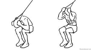Image result for abdominal na polia