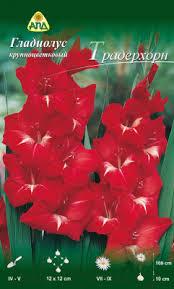 АПД <b>Гладиолус</b> Традерхорн / A30199 (10шт) Семена цветов ...