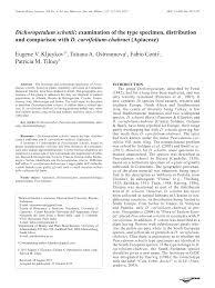 (PDF) Dichoropetalum schottii: examination of the type specimen ...