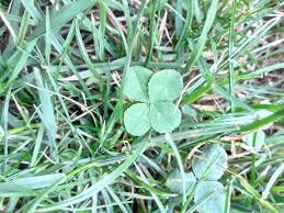Get <b>Lucky</b> This St. Patrick's Day   Sierra Club