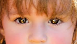Image result for kids eyes pic