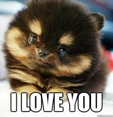 I love you. #Meme #Puppy www.lovehealsus.net | PUPPY LOVE ... via Relatably.com