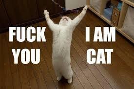 Résultat de recherche d'images pour 'lol cat'
