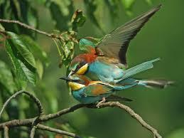 """Résultat de recherche d'images pour """"gifs oiseaux"""""""