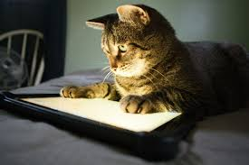 Image result for cats with computers and tablets