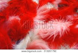 <b>red</b>, <b>pink</b>, <b>white fluffy</b> feathers background. colored feathers close-up ...