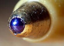 <b>Шариковая ручка</b> — Википедия