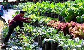 india    s first fully organic state sikkim to now have institute on    sikkim to have institute on organic farming