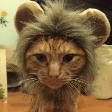 Online Shop <b>Pet</b> Lion Mane Costume for <b>Cats</b> Small <b>Dogs Funny Pet</b> ...