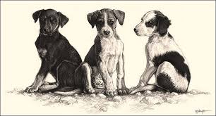 Image result for pencil sketches of indian street dog