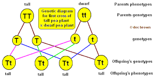 genetics  the science of heredity   lessons   tes teachgcse aqa unit b   cell division and inheritance genetic variation