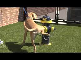 Image result for ohio state fire hydrant