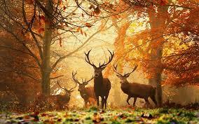 Kuvahaun tulos haulle autumn