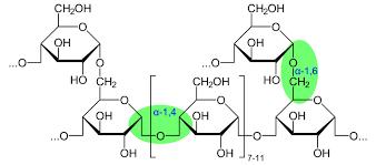 hình ảnh liên kết glycoside