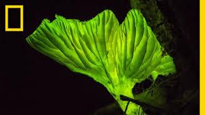 Glow-in-the-Dark <b>Mushrooms</b>: Nature's <b>Night</b> Lights   National ...