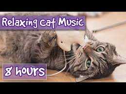 8 HOURS of <b>Relaxing</b> Music for <b>Cats</b> and Kittens! - YouTube