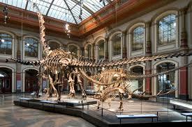 The <b>World of Dinosaurs</b> | Museum für Naturkunde
