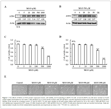 diabetic retinopathy methylglyoxal activating transcription biochemistry pharmacology effects mgo atf6 protein expression levels
