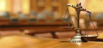 law essay help tree common law essay writing  common law essay writing