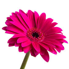 flowers essay in kannada the best flowers ideas essay on flowers apa urgift co