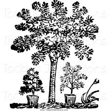 Image result for plant clipart black and white