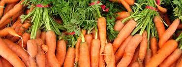「胡蘿蔔和番薯」的圖片搜尋結果