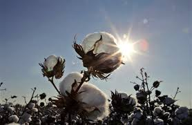 Image result for cotton field workers