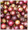 madagascar plum