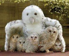 2966 Best <b>Owls</b> images   <b>Owl</b>, <b>Beautiful owl</b>, <b>Birds</b>