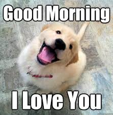 Good Morning I Love You - Actual Puppy - quickmeme via Relatably.com