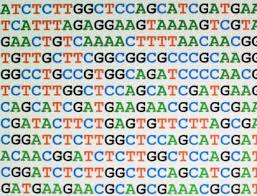 Resultado de imagen para bionformatica