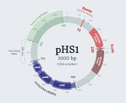 any recommendations for software for drawing plasmid maps     design something pretty close using http   angularplasmid vixis com  it    s    open source  and comes   plenty of examples of how to create what
